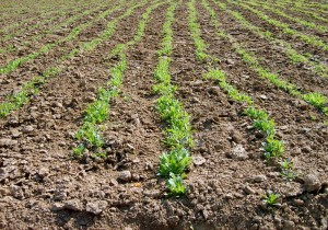 Soil moisture measurement