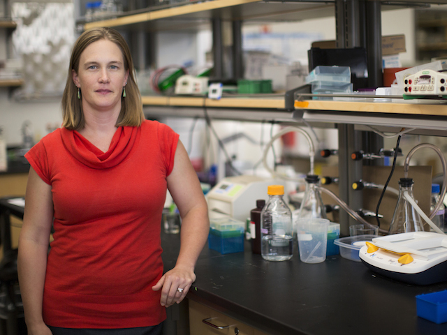 Biomedical engineer Sarah Stabenfeldt has received the National Institute of Health (NIH) Director's New Innovator Award to support her work to develop a tool kit with ability to detect signs of brain injury at the molecular and cellular levels. Photographer: Jessica Hochreiter/ASU