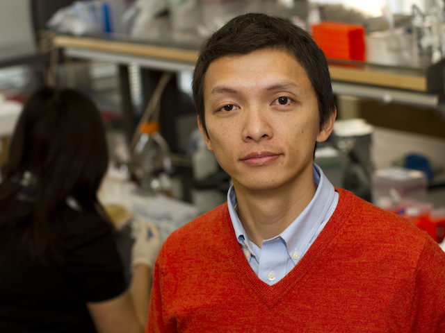 Biomedical engineer Xiao Wang is leading research to understand the fundamental nature of gene networks. Photographer: Jessica Hochreiter/ASU.