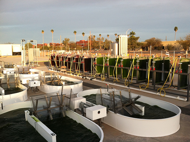 Quest to boost microalgae growth promises more sustainable energy