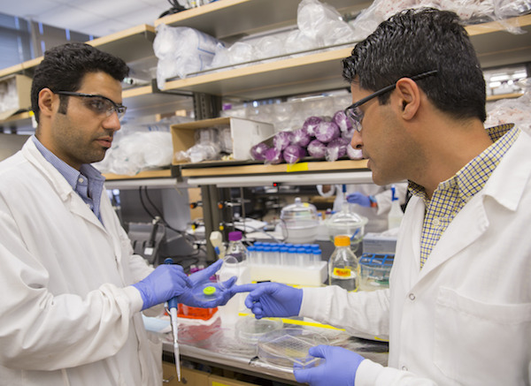 "A photo of Mehdi Nikkhah working in a lab with a student with a caption of """"Imagine what we can learn from a heart tissue model that lives outside of the body and is capable of replicating what the heart experiences during a heart attack,"" says Mehdi Nikkhah (right). Photographer: Jessica Hochreiter/ASU"""