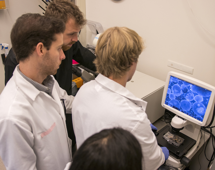 A group of students looking at a monitor. Caption: Graduates students from the Brafman Lab reviewing data. Photographer: Marco-Alexis Chaira/ASU