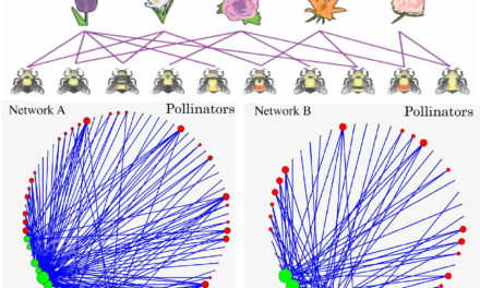 New tipping point prediction model offers insights to diminishing bee colonies
