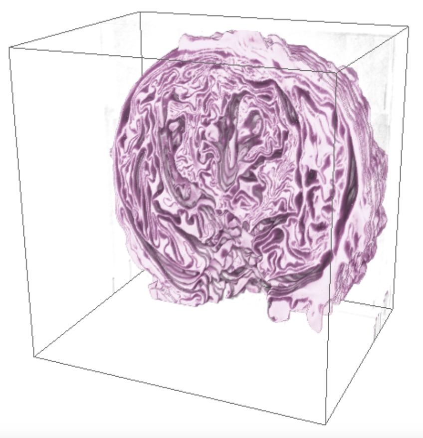 3D Reconstruction of red cabbage.