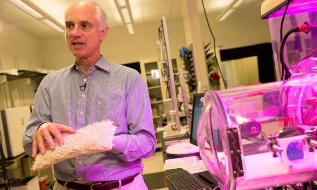 Lackner's carbon-capture technology moves to commercialization