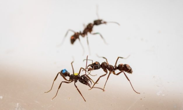 How do I love ants? Let me count the ways