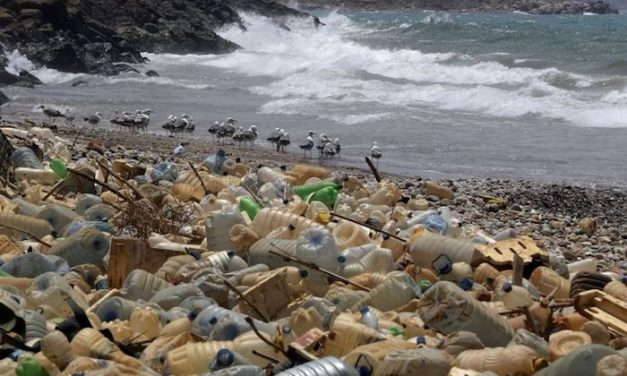 HEARTBREAKING IMAGES THAT SHOW THE IMPACT OF PLASTIC ON ANIMALS IN THE OCEANS