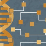 Fulton Schools researchers reveal new understanding of synthetic gene circuits