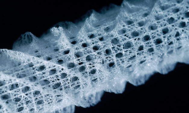 The Curious Strength of a Sea Sponge's Glass Skeleton