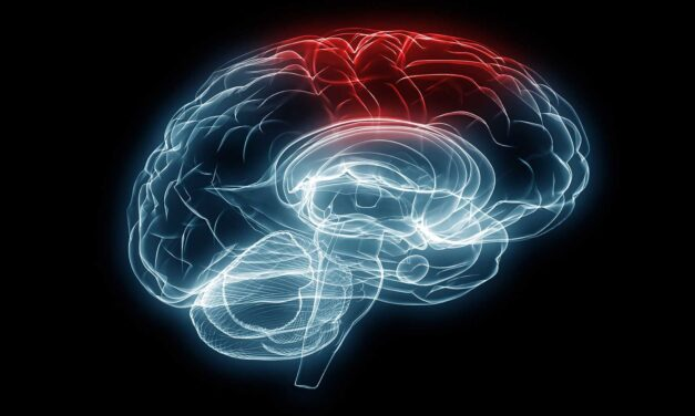 Brain injury research explores sex-dependent therapeutics