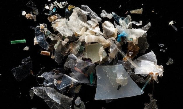 Microplastics are everywhere — but are they harmful?