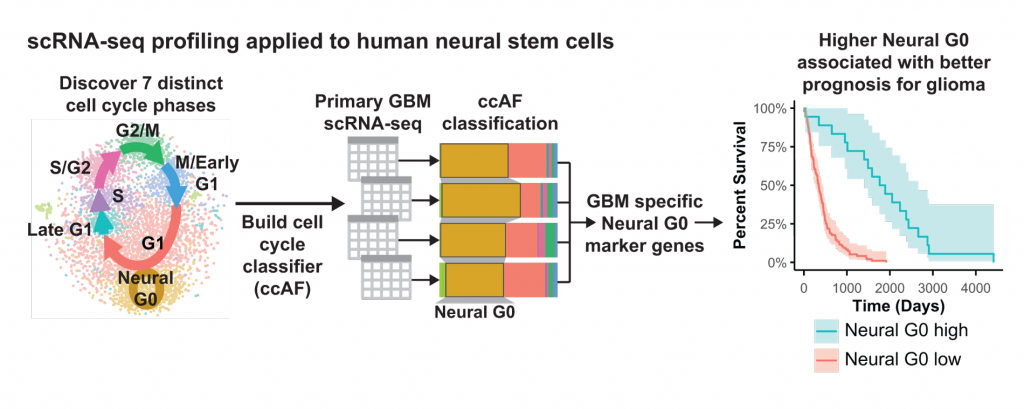 A figure shows the research process of discovering Neural G0, building a cell classifier, and studying glioma tumor prognosis.
