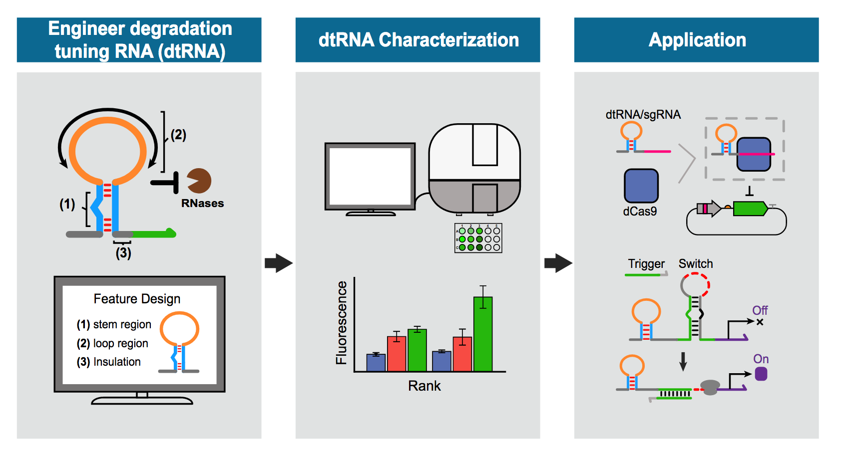 illustration shows the engineering of degradation tuning RNAs from Xiao Wang