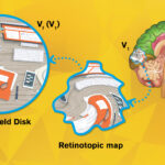 Mapping the mind's eye